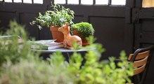 Jardin d'intérieur : l'oasis en vogue dans la maison