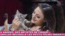 À Angers, des artistes de cirque anglais recueille les petits félins errants ! Maintenant dans la Minute Chat #203