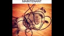 Les chats savent s'adapter ! la preuve
