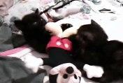 kittie kitties every rose.wmv