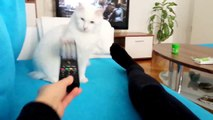 15 Minutes with Funny Cats  || Funny Cats Compilation  ||  Funny Cat Videos Ever