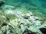Snorkeling Samos/Greece 2009
