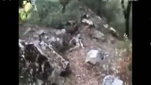 REAL ALIEN Caught in the Woods - Real Grey Footage - UFO ET Reptilian