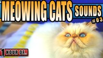 Cat sounds, cat meowing, kitty sounds to make a cat happy, attract cats or annoy dogs.