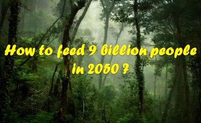 COP22 Rainforest permaculture - EL4DEV - Le Papillon Source Inner Africa 3