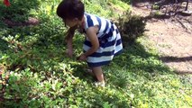 FEED BABY ALIVE STRAWBERRIES! Baby Alive Loves To Eat Strawberries In The Strawberry Patch