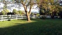 EPIC fence shots part 1