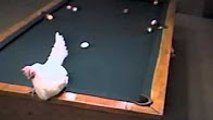 Come Play 8 ball Poo; With Hen-Amazing Expert Hen--Funny Videos-Whatsapp Videos-Prank Videos-Funny Vines-Viral Video-Funny Fails-Funny Compilations-Just For Laughs