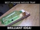 Le piège à souris qui ne blesse pas le petit animal. Invention incroyable