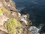 Galapagos Islands travel: Cliffs of South Plaza Island. Iguana video. Lizard in cactus.