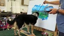 Jumpy le chien réalise son premier chef d'oeuvre !