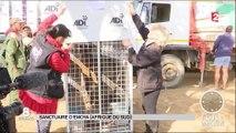 33 lions sauvés de la maltraitance des cirques