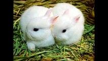 1 Minik,2 minik,3 mini mini minik tavşan Çocuk Şarkısı