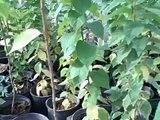 The BEST Las Vegas Backyard Garden - 5 AMAZING Plants for Desert Gardening