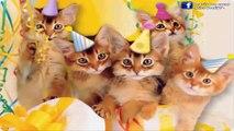 Ces quelques boules d'amour poilus te souhaitent avec moi un très joyeux anniversaire ma chérie.