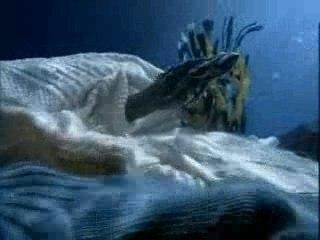 Super pub Ariston Aqualis poisson mer