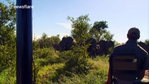 Furious elephants charge safari vehicle in South Africa
