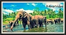SRI LANKA: Die Insel des Lächelns
