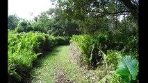 La Réunion. Anse des Cascades le 23 Mai 2013