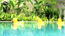 ECOWELL BABY CARE Shampoo and Lotion. Natural Eco Bio Cosmetics - Manufactured By Ekokimya