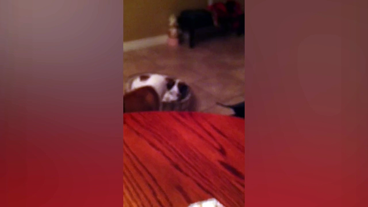 Dog Flips Brother Out of Bed