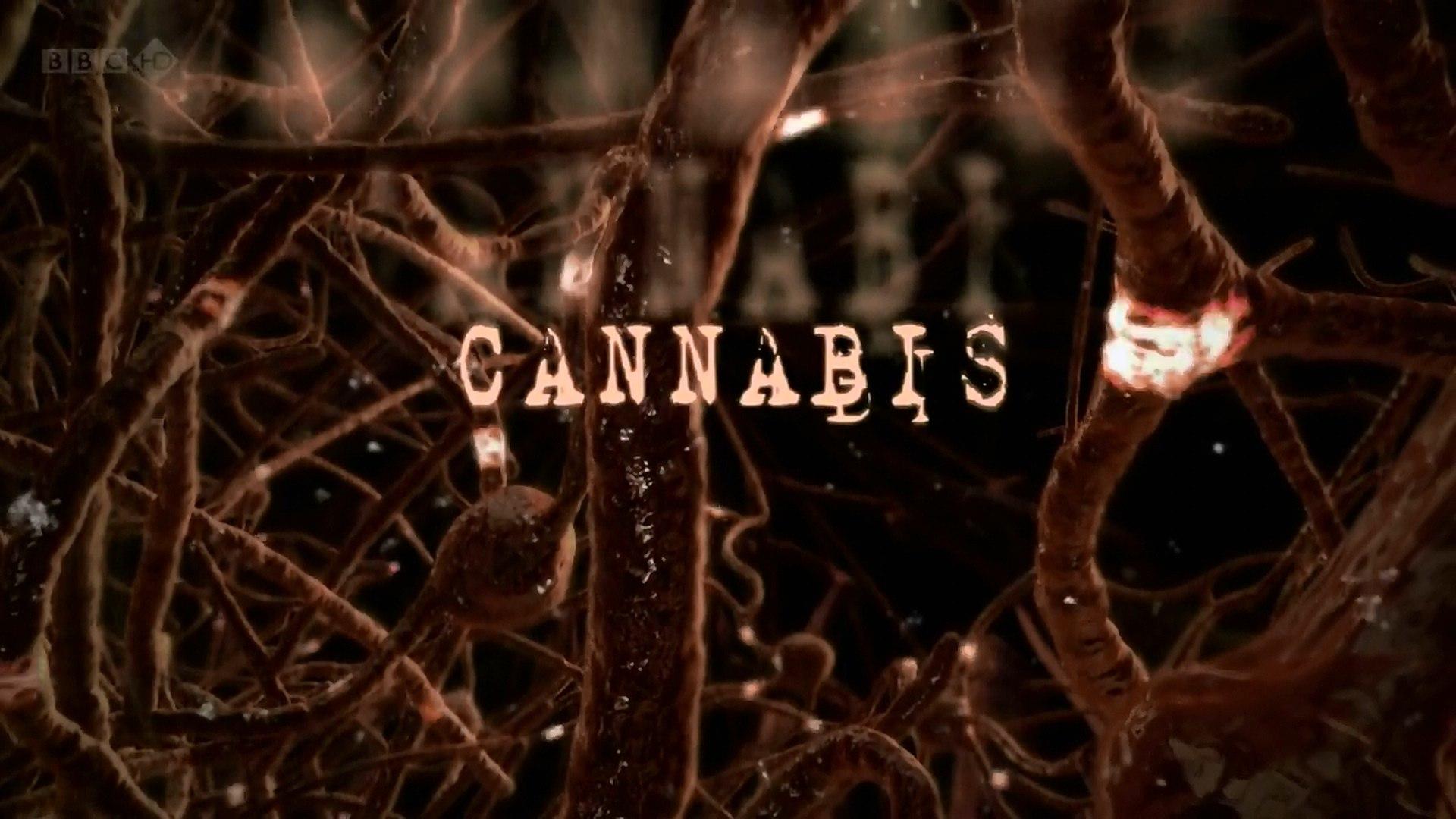 Ввс фильм о марихуане пересадка конопли в горшок