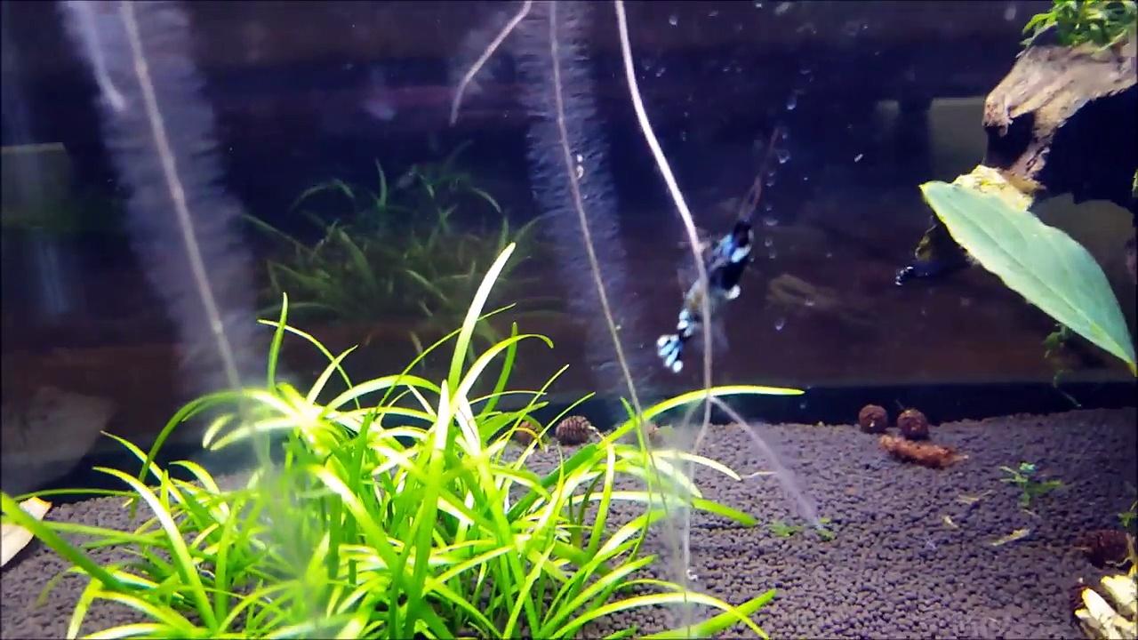 Coffee Table Update: New Shrimp & Unique Moss Ledges!