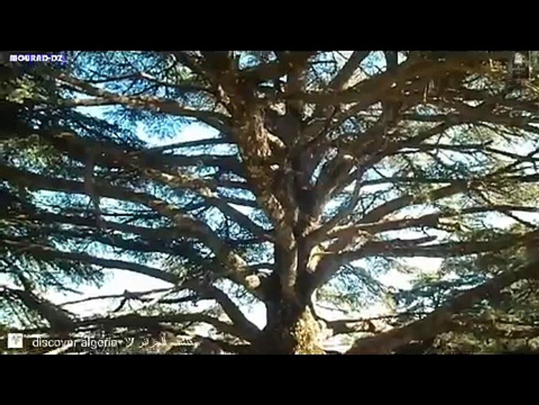 مقتطفات من جمال الجزائر  discover algeria  ツ اكتشف الجزائر