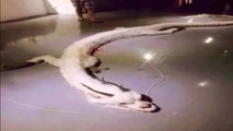 White Dragon has been Shot dead in Malaysia-Caught on CCTV