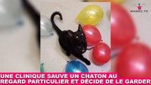 Une clinique sauve un chaton au regard particulier et décide de le garder ! L'histoire dans la Minute Chat #212