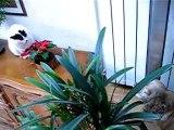 Chien contre chat II (janvier 2005)