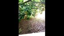 Meizu m1 note Camera samples- Meizu m1 note