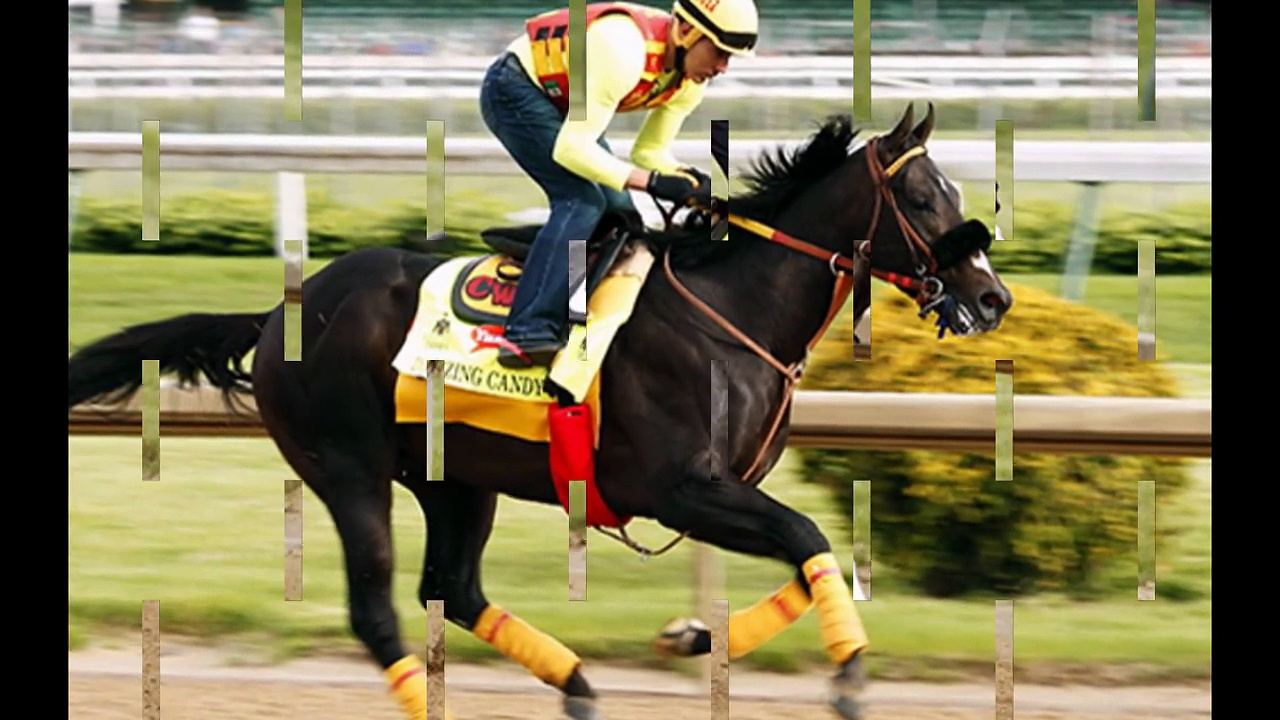 Kentucky Derby 2016 – Meet The Thoroughbred Horses Racing In The Competition