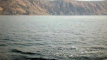 Dolphins off Croatian Coast, 26/08/09, Part 1