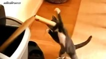 Cats Boxing Funny Compilation 2014 NEW - Funny Cats Commercials