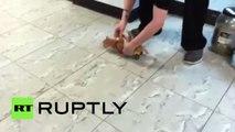 Prothèses roulantes en Lego pour chatons créées par des vétérinaires