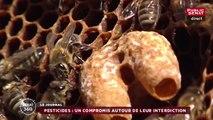Biodiversité : Un compromis trouvé sur les néonicotinoïdes