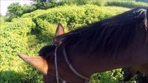 Epic horse riding and farm life in Fiji - GoPro