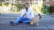 Amores Perros y Otros Amores - Top Nutrition y el consultorio canino- Alimentos prohibidos
