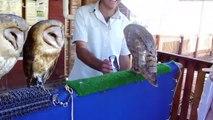 ANIMALES CHISTOSOS Y GRACIOSOS #01 _ Vídeos de risa de animales (Perros, Gatos
