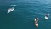 Tranquillement, ils font du paddle entourés de baleines
