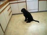 Awesome dog Tricks part VIII: Cruiser Labradoodle Tricks: 16 + tricks at 7 months. Smart dog!