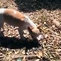 Questo cane ha perso il suo cucciolo, quello che ha fatto con il suo corpo senza vita è stato Strazi
