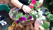 How to Make a Summer Hanging Basket with Jeannine at Bents Garden & Home