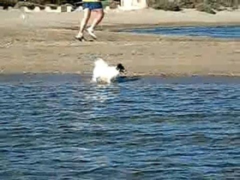 Petite Ulla est une bonne nageuse