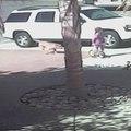 Un chat héroïque sauve un enfant d'une affreuse attaque de chien
