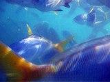 Whitsunday Snorkling 15