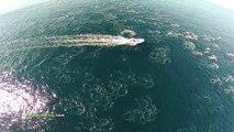 Un drone filme un banc de dauphins et de baleines au large de Maui : magique