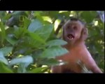 Biggest wild animal fights - CRAZIEST Animals Attack - Eagle Extreme attack of Monkey