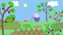 Pepa la Cerdita, Peppa pig español Latino | Capitulo : Plantando semillas de fresas (NUEVO)2016.